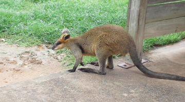 オーストラリア遠征 その1
